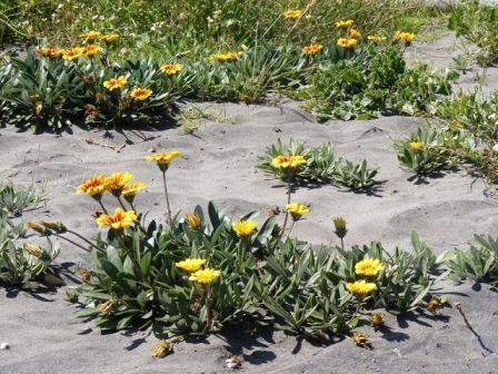 sand+flowers