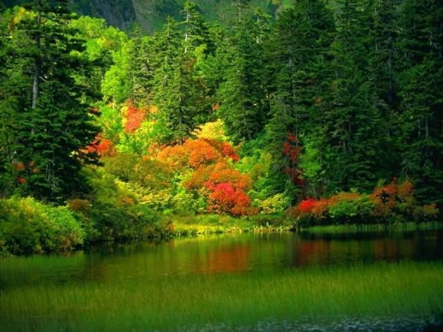 Autumn ScenicReflections