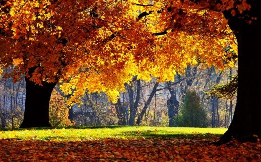 Autumn WallpaperPin