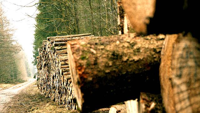 Grigioperla Essence La Perla Chopped Wood wikimedia