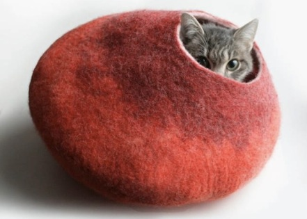 Baghari Cat Cocoon Inthralled