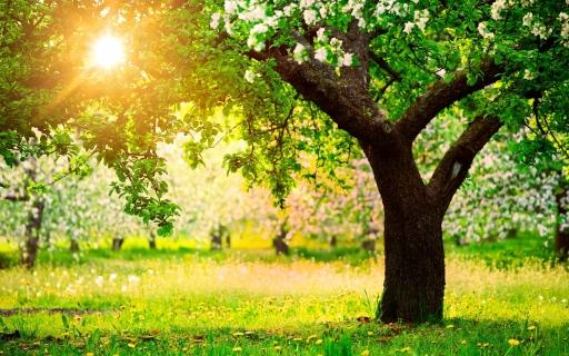 Sun Jil Sander Sun Through Trees hdwallpaperslist