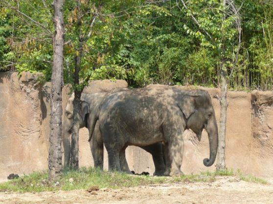 Jungle L'Elephant MorgueFile