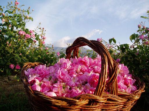 Shanti Shanti Bulgaria Rose Bulgaria-Trips
